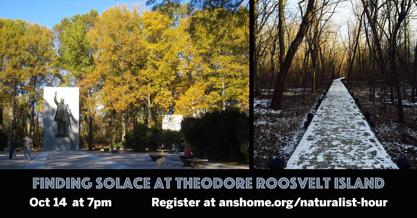 Finding Solace at Theodore Roosevelt Island