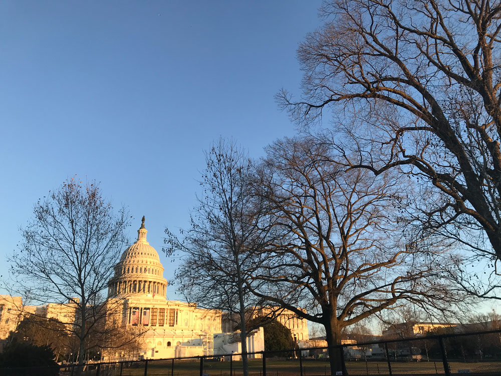 Trees line the way to Capitol Hill