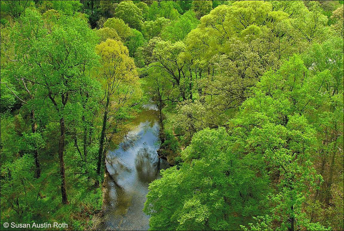 Nature's First Green Is Gold in Rock Creek Park