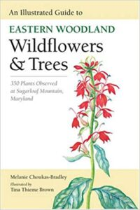 Nature Guide: Eastern Woodland Wildflowers