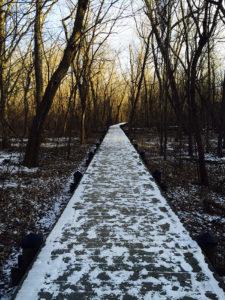 Swamp boardwalk in winter at Theodore Roosevelt Island