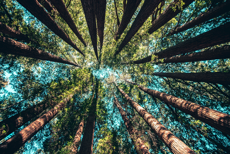 Seeing tall trees from below